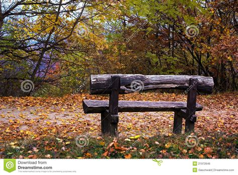 bench in forest wooden bench in an autumn forest royalty free stock image