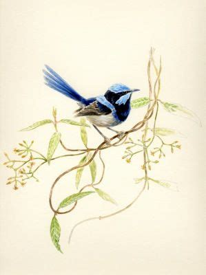 blue wren tattoo designs 185 best blue wren inspired arts and crafts images on