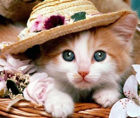 Sho Kucing Yang Bagus 7 dp kucing lucu ngegemessin gambar animasi gif swf dp bbm animasi bergerak