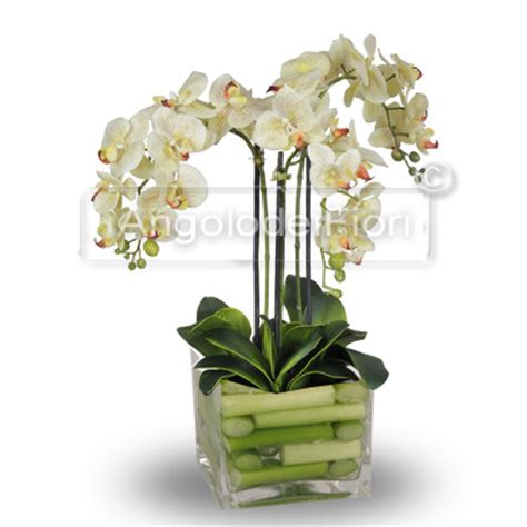 vaso per orchidea phalaenopsis consegna a domicilio pianta di orchidea phalaenopsis