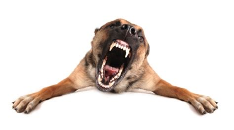 Dogs Rage Animal Emotions The Driving Our S Behaviors Smart Animal Systems