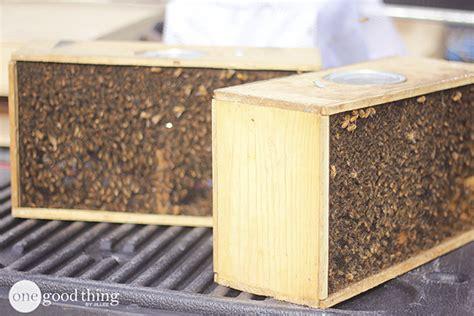 backyard beekeeping become a backyard beekeeper one thing by jillee