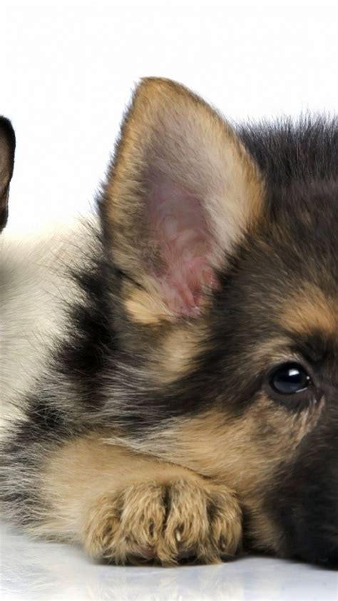 fotos animales fondo de pantalla fondos de pantalla de animales para iphone