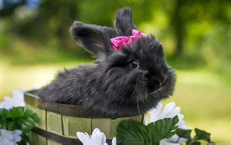 black and white rabbit wallpaper hd black and white wallpaper for download download lengkap