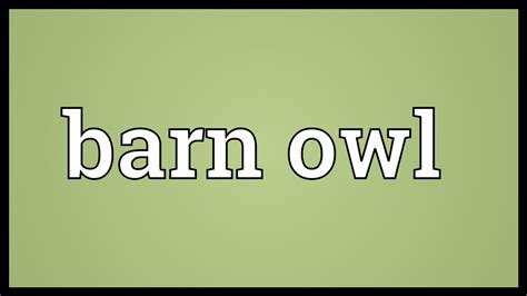 Barn Meaning Barn Owl Meaning