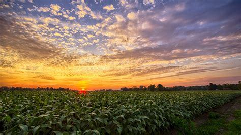 sunset  indiana bean field south  milford indiana hd