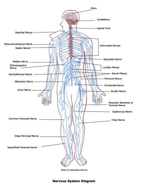 diagram of machine labeled nervous system diagram anatomy human