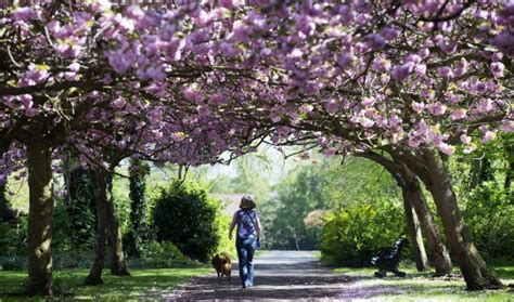 cherry tree journal here s what happened today friday 183 thejournal ie