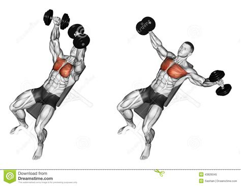 incline bench press works what muscles exercising breeding dumbbells lying on an incline stock