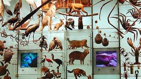 cuantas imagenes sensoriales hay 191 cu 225 ntas especies hay en la tierra abc es