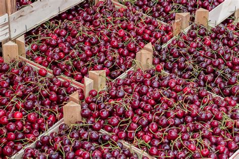 best cherry picking ny has to offer near the city