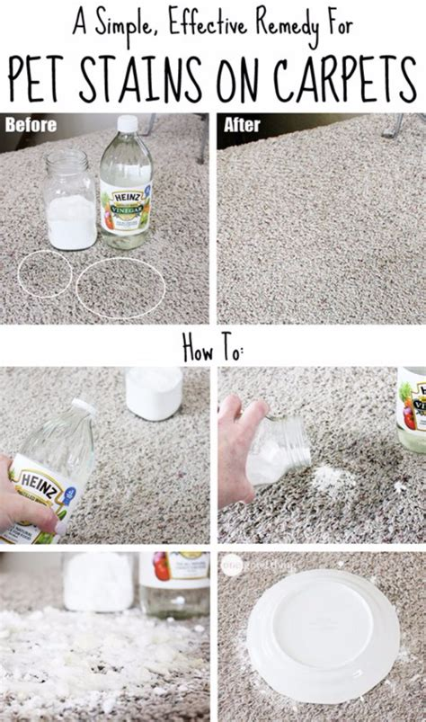 how to remove black pet urine stains from hardwood floors 33 hacks you need to try today page 5 of 5 diy