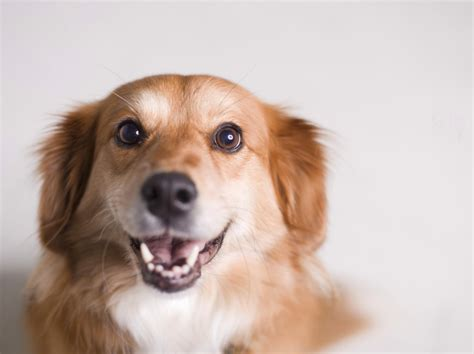 can dogs tell when your your can tell if you are happy or angry news article
