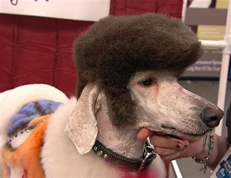 dog haircuts gone wrong dog grooming gone wrong page 12 of 15