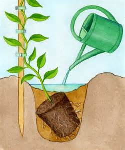 Charmant Plante Grimpante Mi Ombre #1: plantation-plante-grimpante.jpg