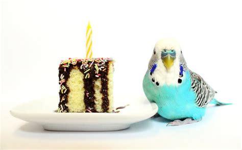 happy birthday bird images birthday bird quotes quotesgram