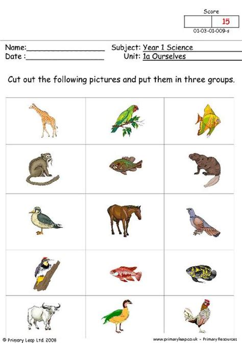 printable animal groups animal groups primaryleap co uk