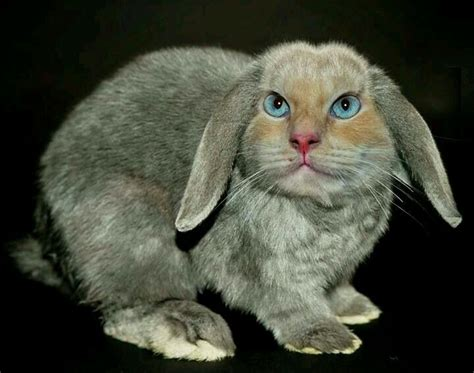 cabbit images 34 best cabbits cat rabbit images on bunnies