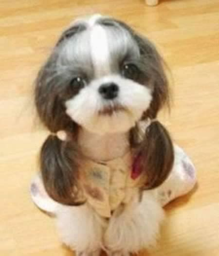 animal hairstyles 12 animal hairstyles amazing