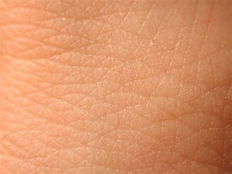 Human Skin Shedding by 69 Best Images About Science Projects Skin On