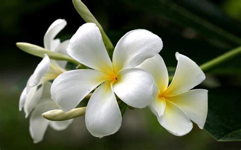 Imagenes Flores Blancas | fotos de flores blancas imagui