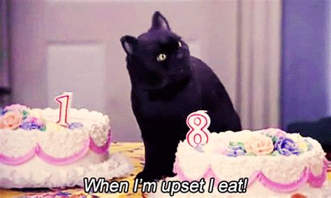 Sabina Cat Food sabrina the witch gif find on giphy