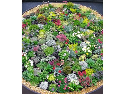 steingarten stauden mix 10 pflanzen winterhart lidl