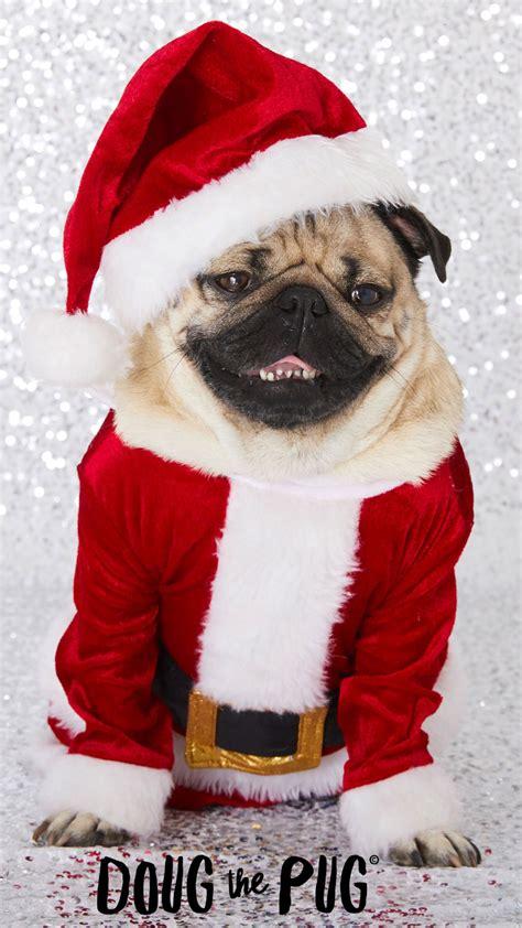doug  pug christmas wallpapers clairesblog
