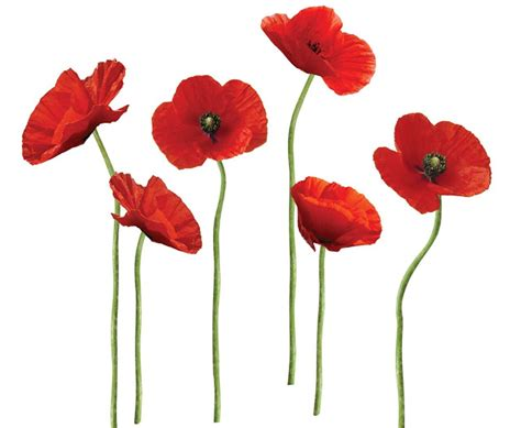 poppy home decor pin by mahryn mnsri on colors of spring summer 2013 and