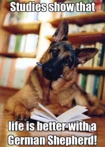 German Memes - 17 best ideas about funny german shepherds on pinterest