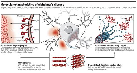 m protein disease the molecular basis of alzheimer s plaques science