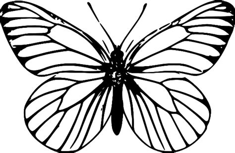Butterflies Images Outline butterfly outline clip at clker vector clip royalty free domain