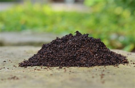 Are Coffee Grounds For Your Garden by Using Coffee Grounds In Your Garden Redeem Your Ground