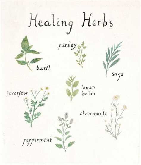 herb tattoo the 25 best ideas about herb on simple