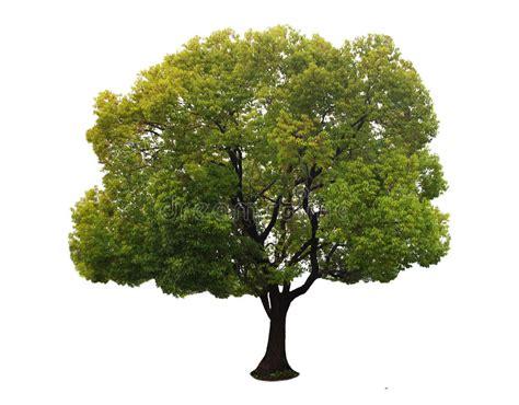 een dierenspeciaalzaak met een u een boom met een witte achtergrond no14 stock foto