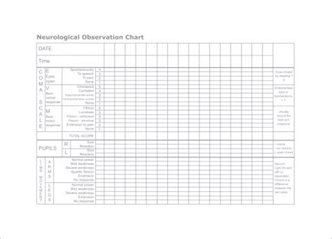 neuro template pdf chart template 10 free sle exle format