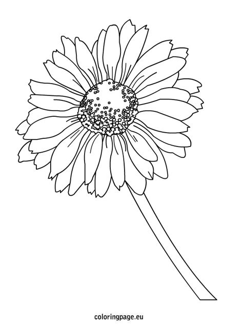 coloring page daisy flower daisy coloring page