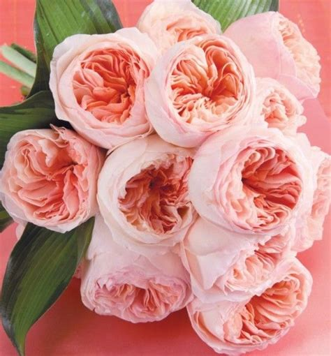 flower of the month david austin roses your event