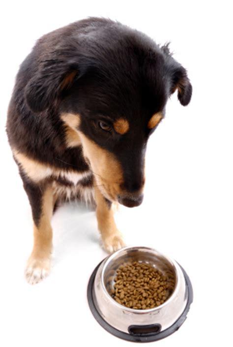 how often should dogs eat how often should i feed my ruff ideas