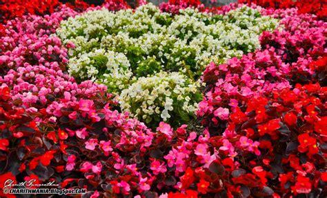 charithmania flowers nuwara eliya