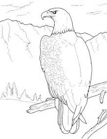 bald eagle color sheet free printable bald eagle coloring pages for