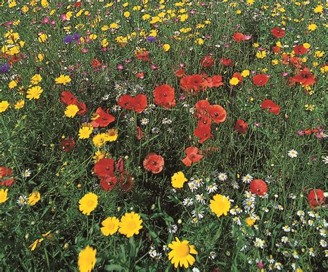 flowers uk flowers annuals and glorious perennials