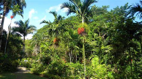 Shaw Botanical Gardens Shaw Park Botanical Gardens Shaw Park Botanical Gardens Jamaica Vacations Shaw Park Garden