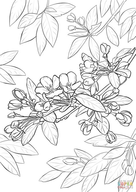 coloring pages of apple blossoms apple blossom coloring page free printable coloring pages