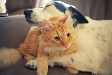 cat and puppy cat and wallpapers and images wallpapers pictures photos