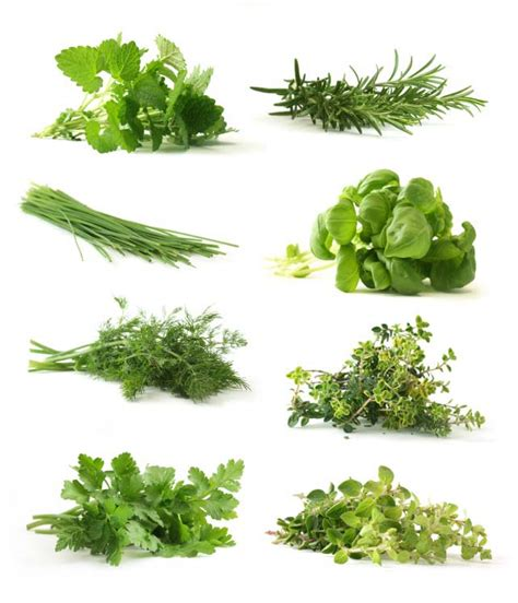 What Are Botanicals Categories Of Herbs
