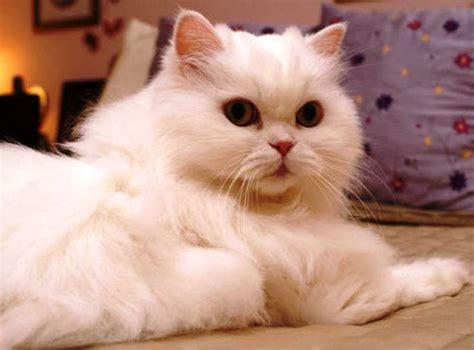 Printing Kucing gambar 21 foto gambar kucing imut lucu banget