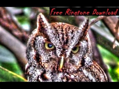 free haunting screech owl call ringtone youtube