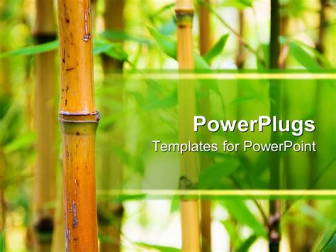 Powerpoint Template Bamboo Canes With Green Leaves In A Nature Background 2841 Bamboo Powerpoint Template