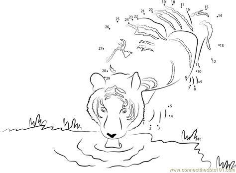 printable tiger dot to dot tiger drinking a water dot to dot printable worksheet